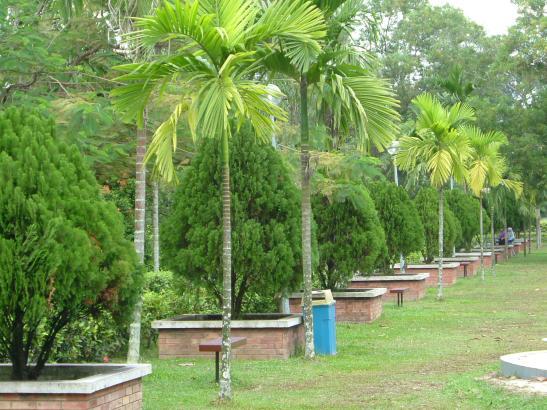 Pepohonan palma menghiasi tempat bersantai